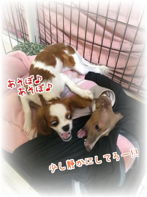 ゆずモカ4_20150904.JPG