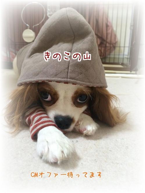 20150930ゆず3.JPG