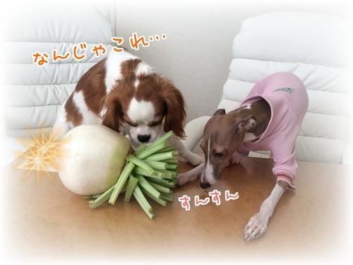 20151116ゆずモカ2.JPG