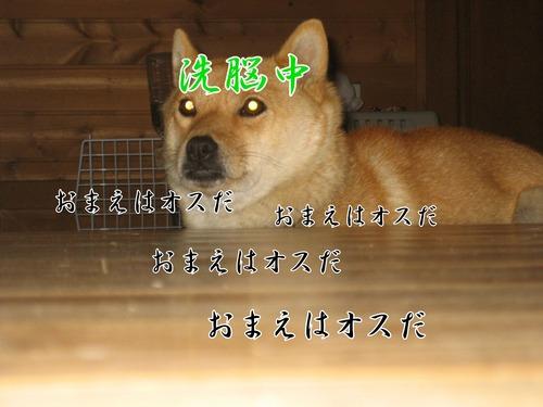IMG_2253ブログ.jpg