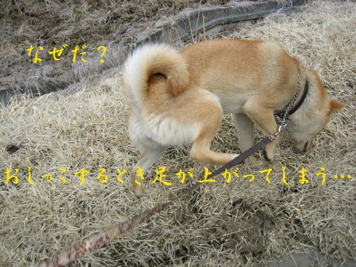 IMG_2328ブログ.jpg