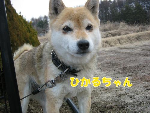 IMG_2330ブログ.jpgのサムネール画像
