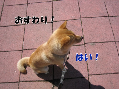IMG_2535ブログ.jpg