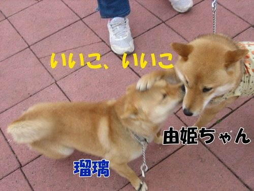 IMG_3017ブログ.jpg