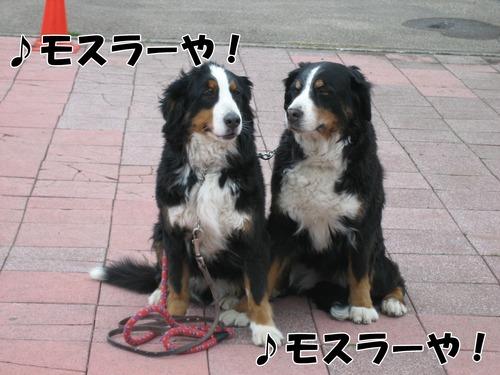 IMG_3073buroブログ.jpg
