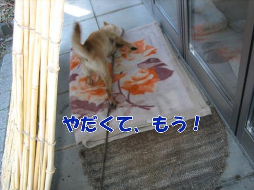 IMG_3144ぶろぐ.jpg