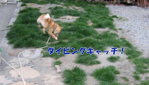 IMG_3218ブログ.jpg