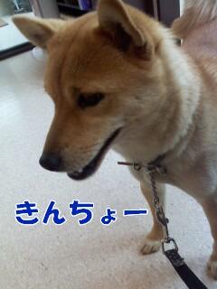 P2012_0425_163711ブログ.jpg