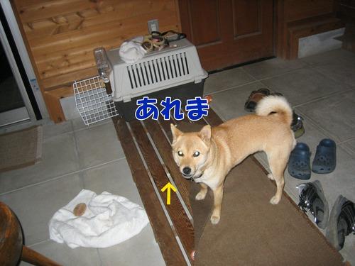 IMG_4272ぶ.jpg