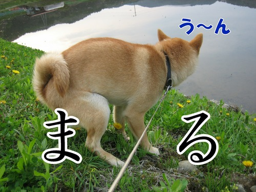 IMG_4035ブ.jpg