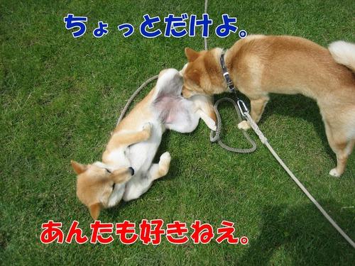 IMG_5100ブ.jpg