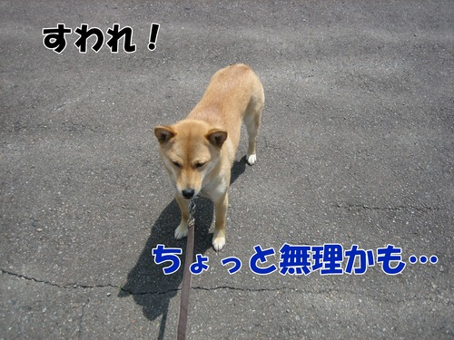 IMG_5250ブ.jpg