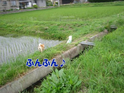 IMG_5262ブ.jpg