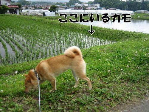 IMG_5419ぶ.jpg