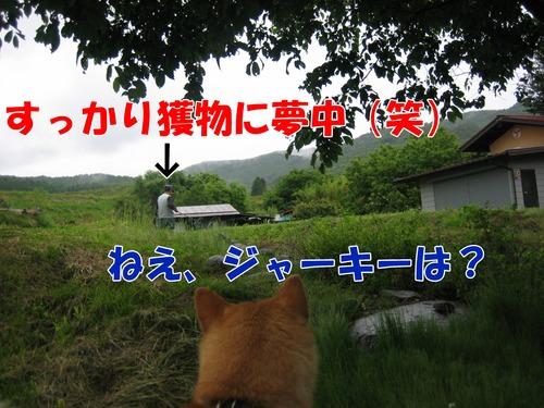 IMG_5429ぶ.jpg