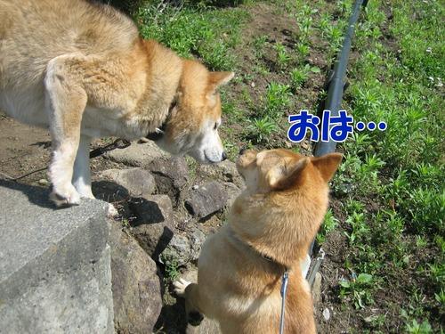 IMG_5430ぶ.jpg