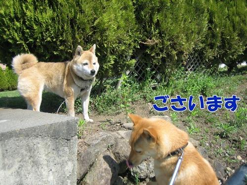IMG_5432ぶ.jpg
