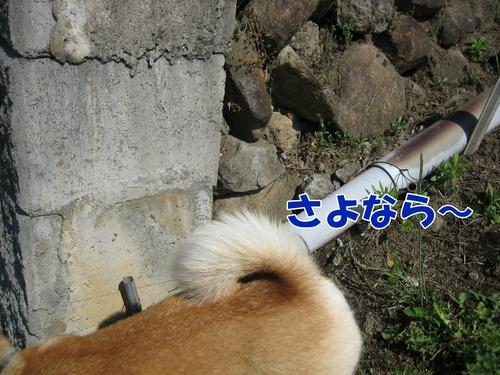 IMG_5433ブ.jpg