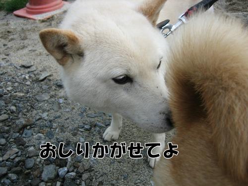 IMG_5519ぶ.jpg