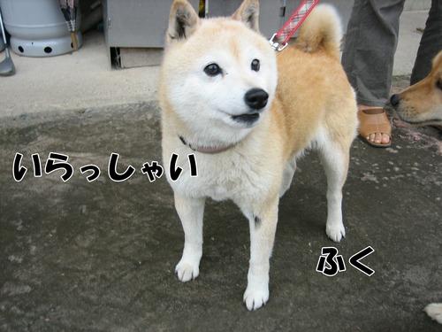 IMG_5568ブ.jpg