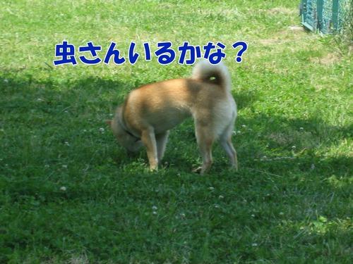 IMG_5984ブ.jpg