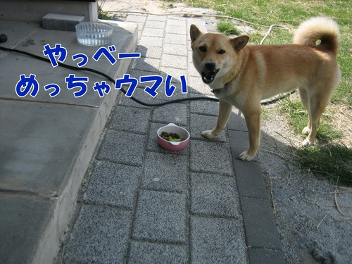 IMG_6031ブ.jpg