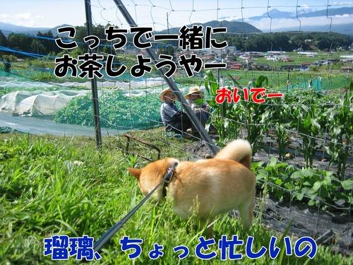 IMG_6107ブ.jpg
