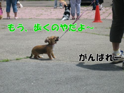 IMG_6244ブ.jpg