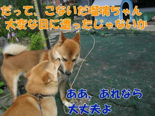 IMG_6370ブ.jpg