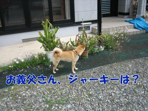 IMG_6378ブ.jpg