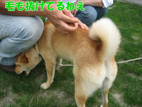 IMG_6462ブ.jpg