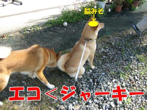 IMG_6654ブ.jpg