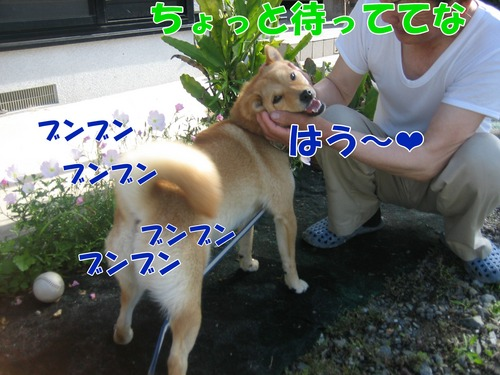 IMG_6656ブ.jpg