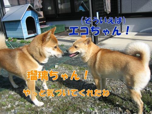 IMG_6664ぶ.jpg