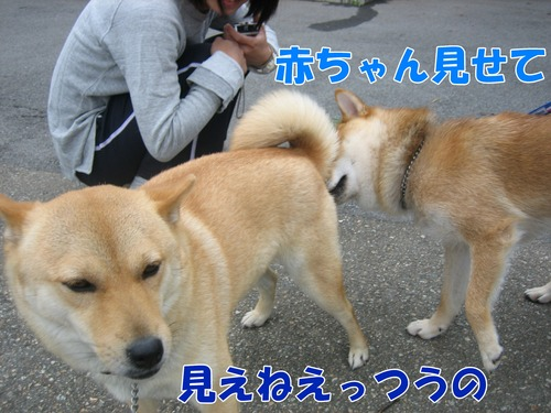 IMG_6742ブ.jpg