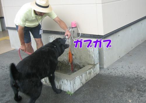 IMG_6799ブ.jpg