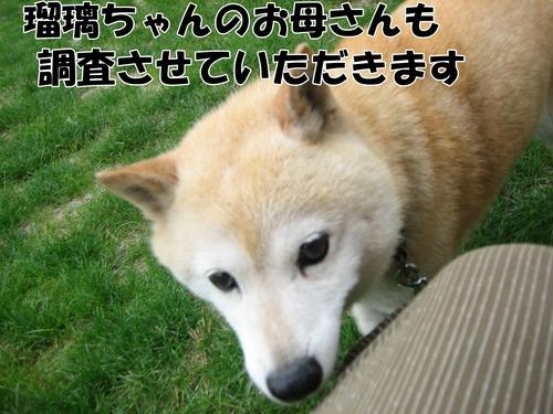IMG_6812ブ.jpg