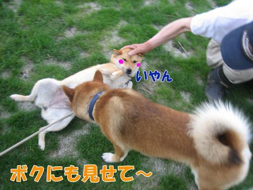 IMG_6853ぶ.jpg