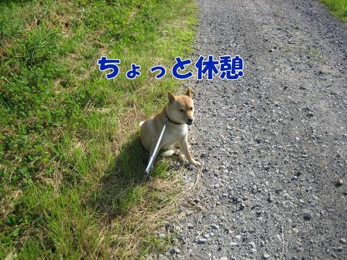 IMG_6909ブ.jpg