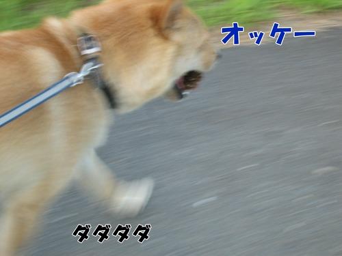 IMG_7046ブ.jpg