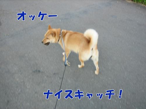 IMG_7049ブ.jpg