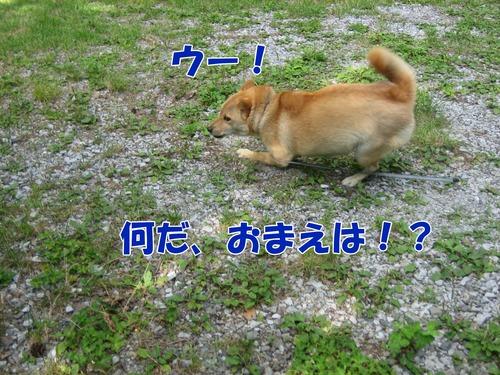 IMG_7151ブ.jpg