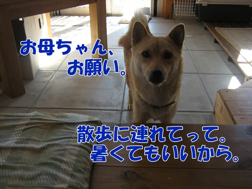 IMG_7723ブ.jpg