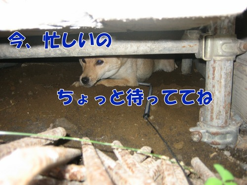 IMG_7876ブ.jpg