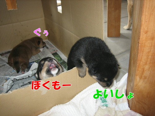IMG_8155ブ.jpg