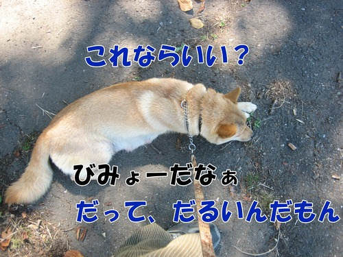 IMG_8411ブ.jpg