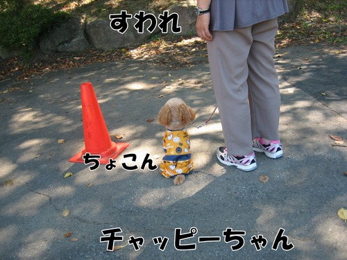 IMG_8419ブ.jpg
