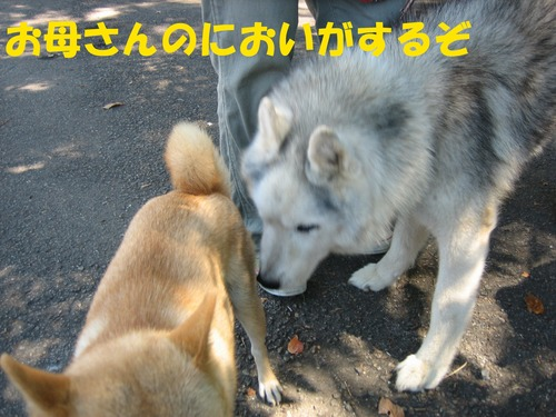 IMG_8431ブ.jpg