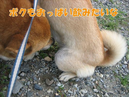 IMG_8576ブ.jpg