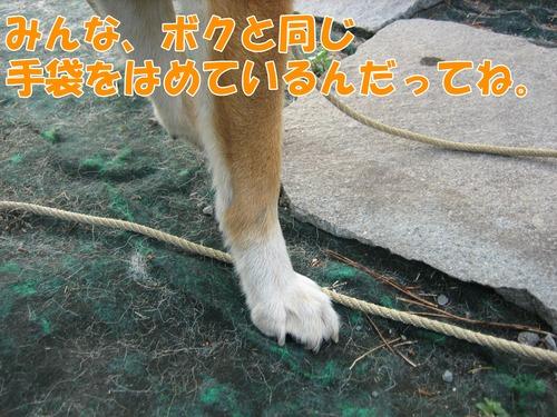 IMG_8589ブ.jpg